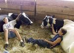 Boys with their cows at county fair