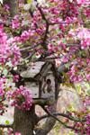 Birdhouse in Cherry tree