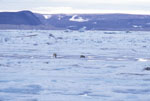 Spitsbergen, Norway, Polar Bears