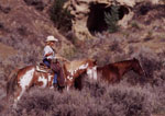 American Cowgirl with horses