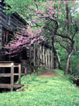 Path along Grist Mill with Redbud