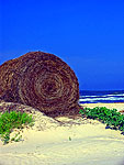 Hay used as a natural barrier to minimize beach erosion Bryant Beach, Tx