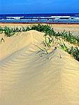 Sand dunes at Bryant Beach, Tx, before the hurricane season, 05