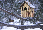 Winter bird house