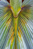 silver palm frond