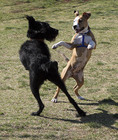dogs dancing