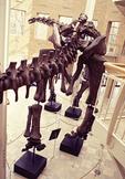 A prehistoric dinosaur in the Fernbank Museum of Natural History, Atlanta, Georgia