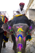 Elephant rides at Amber Fort in Rajasthan Jaipur India