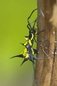 Spider in Amazon Rain Forest