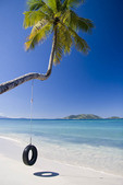 Tire hanging on palm tree overlooking a sandy beach with an ocean and island view
