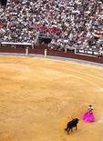 The sport of bull fighting in Madrid Spain