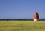 Flowering Canola with grain elevator