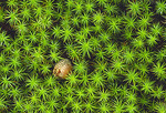 An acorn rests in a patch of green moss