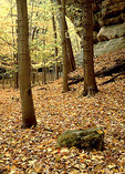 Forest and sandstone cliff with a carpet of autumn leaves