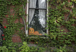 House window with carved pumpkins in it.
