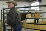 auction assistant looks for bids at annual bull sale, elko county fairgrounds, elko, nv
