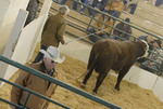 annual bull sale and auction at elko county fairgrounds.