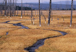 Dead pines along a meandering stream with plains and mountains in the background