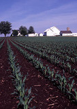 Farm with rows of freshly planted corn