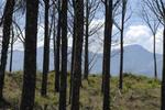 Pochote trees in Costa Rica.