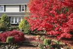 A colorful fall garden.