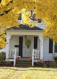 A beautiful yellow tree in front of a house with pumpkins on the porch.