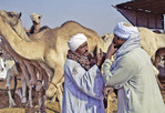 Two men bargaining at a camel market outside of Cairo.