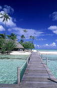 The perfect tropical scene of a wooden dock walkway over water in beautiful Tahiti.