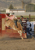 Rider on bareback bronc, Silver State Stampede.