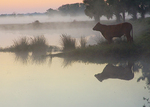 A silhouette of a cow in the mist by a river.