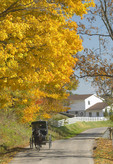 Amish in a horse carriage in the fall.