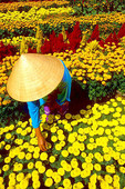 A Vietnam woman tending some yellow flowers.