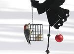 Red-Bellied Woodpecker on a suet feeder.