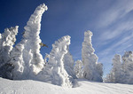 Trees covered in snow in Bavarian Forest National Park.