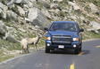 A couple feeding wild sheep from their car.