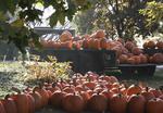 Ohio Fall scene with pumpkins on a farm truck