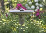 Bird bath in a garden of flowers