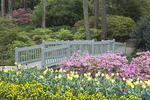 Tulips and varied spring flowers along a garden path with a bridge