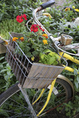 Old bicycle basket used as a planter