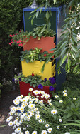 Colorful filing cabinet used as an outdoor planter