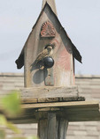 Sparrow on a birdhouse.