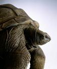 A portrait of a turtle.