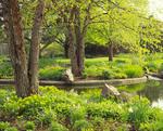 Spring time at small pond, Morton Arboretum.