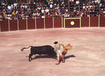 Bullfighting in Mexico during the Veronica
