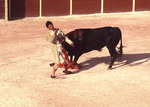 Matador in trouble during a bull fight in Mexico