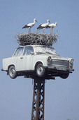White storks perched in large nest on top of car.