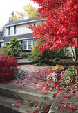 Fall garden in front yard of home