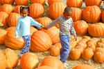 Raleigh State Farmers Market, Black siblings walk among pumpkins grown in North Carolina,