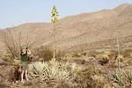 Female birdwatcher in the desert