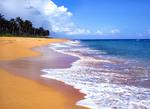 Puerto Rico, Palm trees, shoreline along Piñones